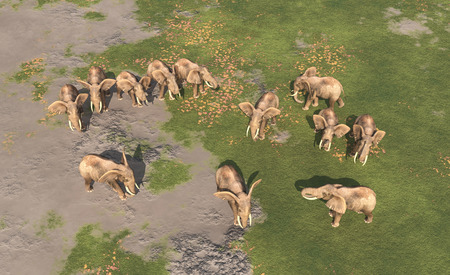 aerial animal: Aerial view of an elephant herd