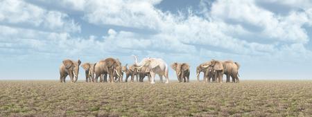 White elephant in an elephant herd