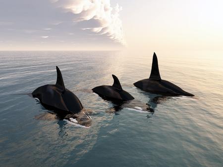 orcinus: Killer whale family Stock Photo