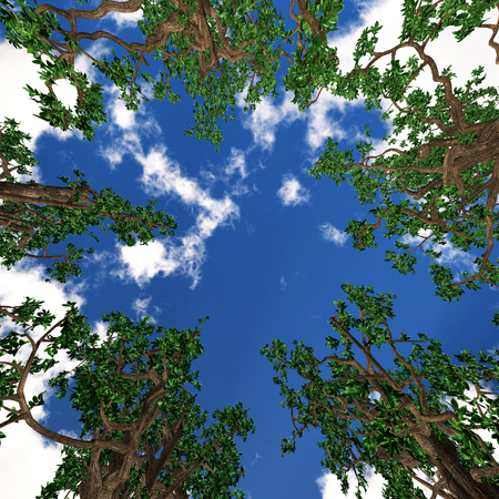 viewing angle: Bottom view of trees Stock Photo