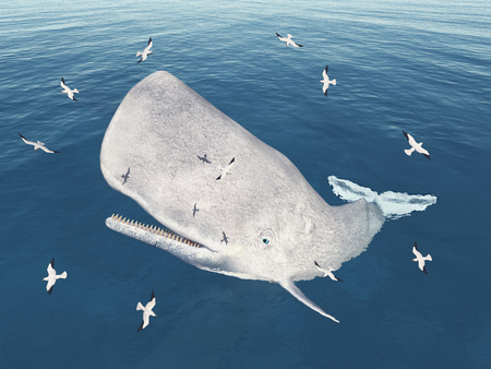Emerging sperm whale and seagulls