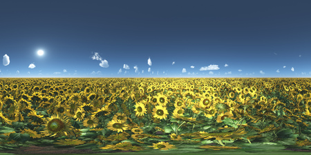 Spherical 360 degrees seamless panorama with a field of sunflowers Stock Photo