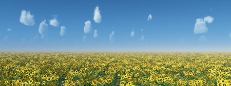 Sunflower field against a blue sky with nice weather clouds Фото со стока - 124861870