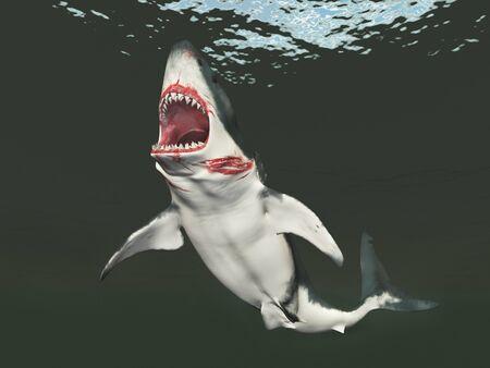 Great white shark Фото со стока