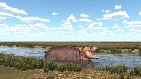 Hippopotamus in a river landscape