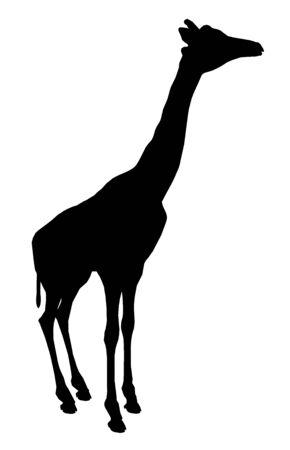 Silhouette of a giraffe Stok Fotoğraf