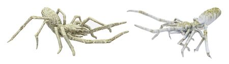 Two futuristic spiders isolated on white background