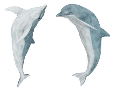 Two jumping dolphins isolated on white background