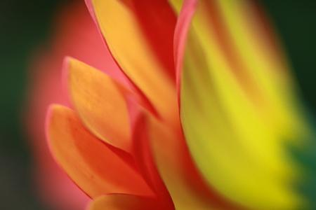 aura: Flower with Aura