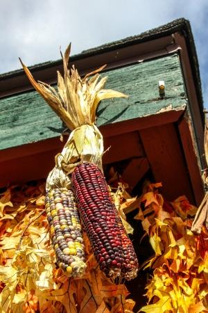 Dry corn decoration
