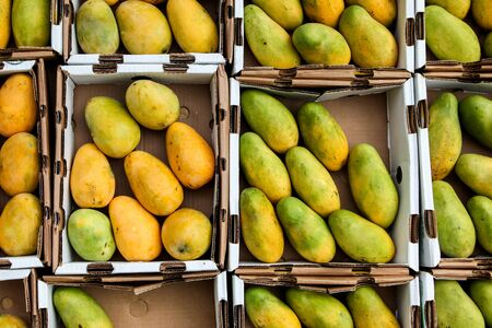 Mangos inside paper container on market 写真素材