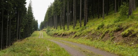forest management: panorama of moutain road  in coniferous forest