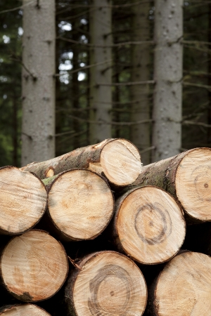 felled: felled stems of trees in coniferous forest