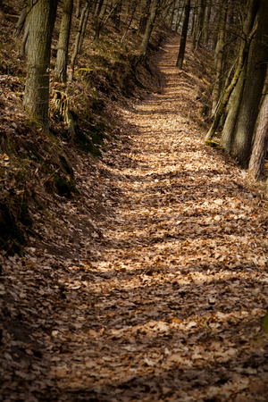 forest path or autumnal scenic rural way