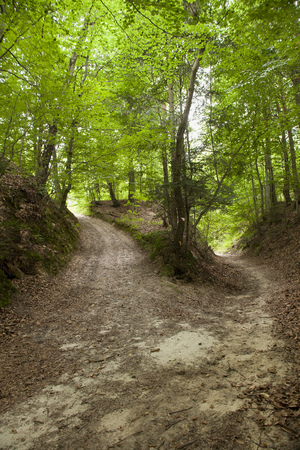 Loess ravine in Roztocze, Poland or two sandy roads in forest
