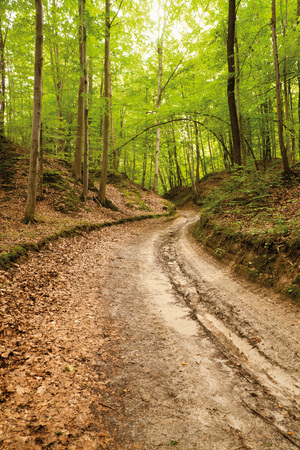 Loess ravine in Roztocze, Poland or sandy winding road in forest