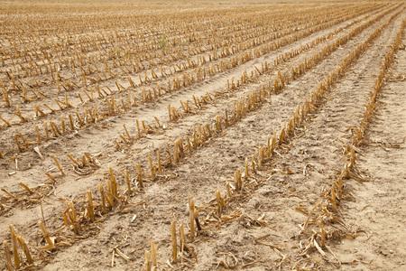 stubble or field after harvest, rural autumnal landscape Reklamní fotografie