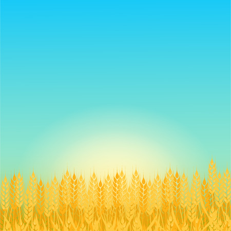 Summer sunny landscape with a field of ripe wheat. Beautiful background for your needs. Sunny day in the wheat field.