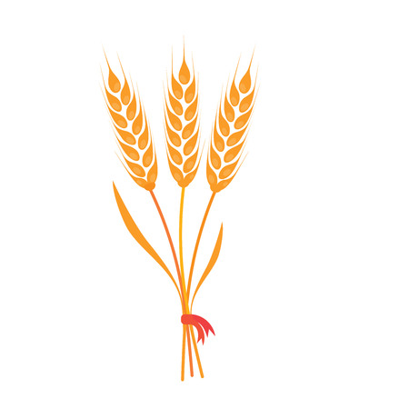 Bunch of wheat, barley or rye ears with whole grain and dry leaves, golden wheat, rye or barley crop with red ribbon harvest symbol or icon sign Vectores