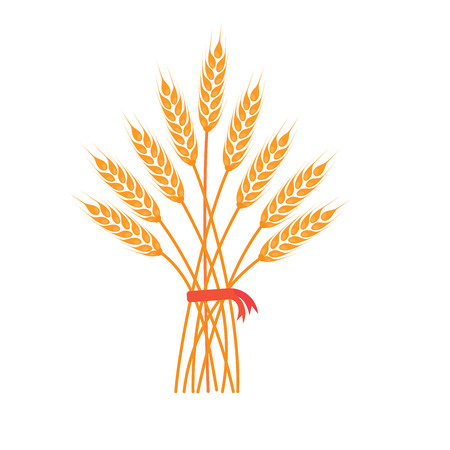 Big bunch of wheat, barley or rye ears with whole grain and dry leaves, golden wheat, rye or barley crop with red ribbon harvest symbol or icon sign