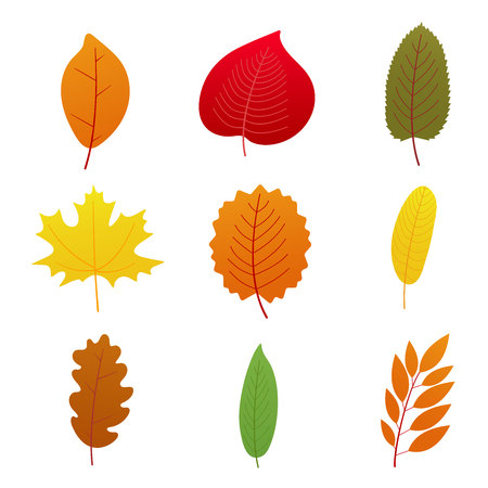 9 Set of multicolored autumn leaves collection flat style design gradient version vector illustration isolated on white background.