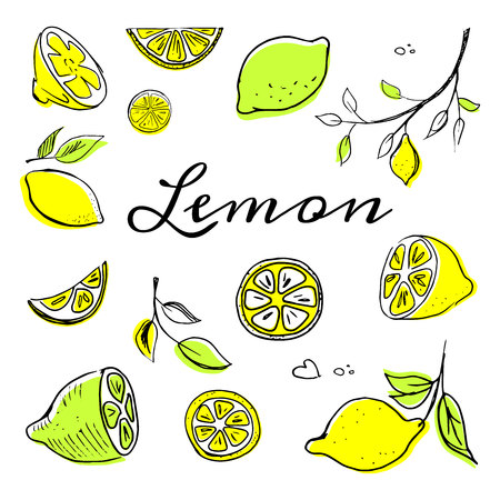 Hand drawn fruits lemon set vector illustration Whole, parts, leaves and brunches sketch style collection. Fresh and tasty!
