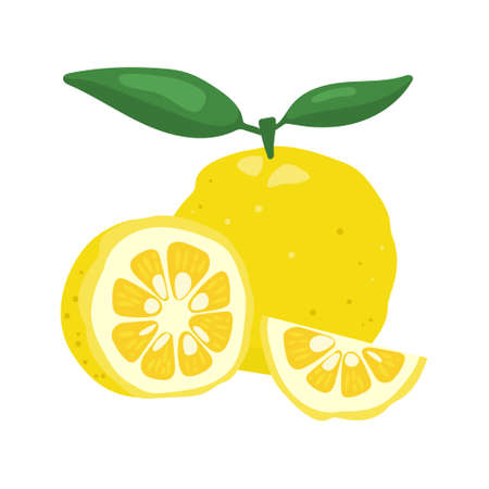 Yuzu japaness citron fruit vector illustration isolated on white background. Full citrus yuzu fresh fruit with green leaves.