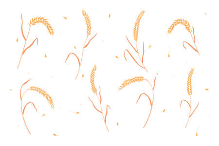Set of dry wheat or rye grain ears flat style design vector illustration. Whole bread cereal grains harvest farming agriculture ears elements symbol isolated on white background. Vetores