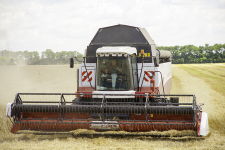 linseed: Combine machine is harvesting oats on farm field. combine harvester working on a wheat field. Combine harvester cuts the field of mature ripe yellow wheat