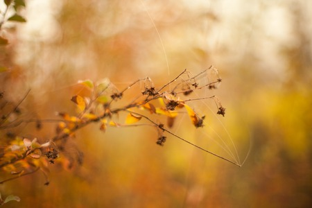 Autumn beech leaves decorate a beautiful nature bokeh background with forest Reklamní fotografie