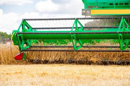 Combine machine is harvesting oats on farm field. combine harvester working on a wheat field. Combine harvester cuts the field of mature ripe yellow wheat