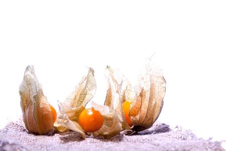 Physalis Solanaceae earthen cranberry bubble Physalis vegetable Physalis strawberry medicinal plant analgesic diuretic cholagogue antiseptic hemostatic healing from diabetes mellitus epilepsy anemia