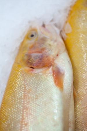 Frozen ice-cold fish in the store Frozen fish. Freshfish market. Gilt-head bream. Sea bream fish on ice. Fresh fish on ice for sale at market.