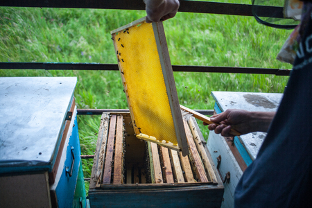 Frames of a bee hive. Beekeeper harvesting honey. Beekeeper Inspecting Bee Hive