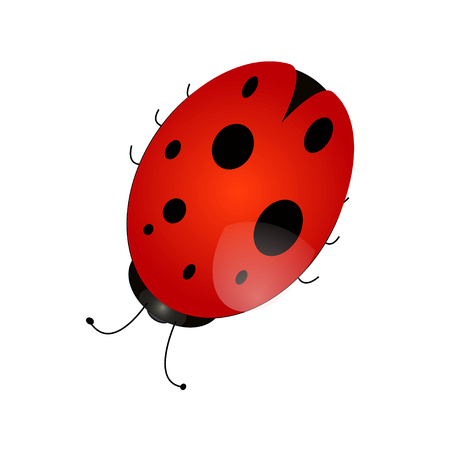 Vector EPS of a ladybird pattern on a white background isolate Illustration