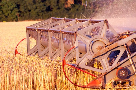 The mechanism of the Combine harvester cuts mower mowing the wheat field of mature ripe yellow wheat