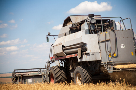 Combine harvester agriculture machine harvesting golden ripe wheat field. Agriculture