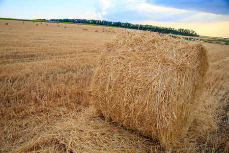 hay-roll straw lying on a sloping field of wheat with the remains of dry yellow stems on a bright sunny summer day Stock Photo