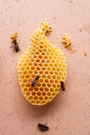 Uterus Bees on Real Honeycombs Made by Bees