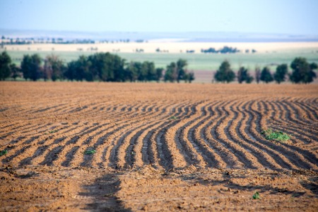 Agriculture landscape. Farmer seeding, sowing crops at field. Sowing is the process of planting seeds in the ground as part of the early spring time agricultural activities.