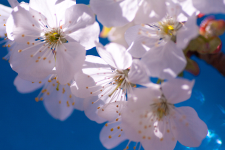 Branches of blossoming macro with soft focus Banco de Imagens