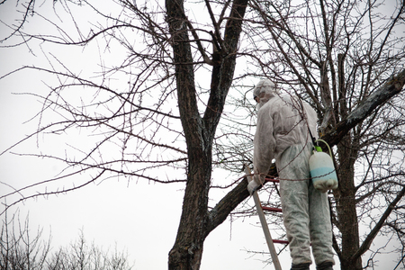 A professional gardener sprays trees in spring with pesticides and chemical solutions to control pests and protect against disease.