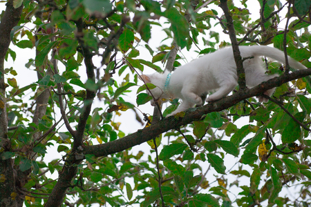 A little white kitten sits high on a tree branch, crawling from a fright dog and meows afraid to get down