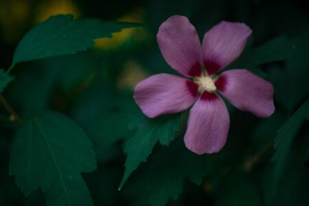natural hibiscus and frangipani flowers and exotic tropical leaves on green bokeh background Imagens