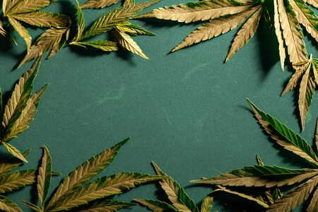 Textured marijuana leaf close-up on a dark background. Background from cannabis drug leaves. Place for text. Imagens