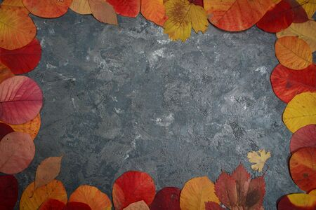 colored background with autumn leaves with place for text Фото со стока