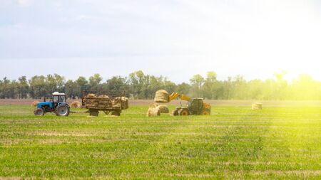 An agricultural tractor loader loads bales of hay into a tractor trailer on the field Stock Photo