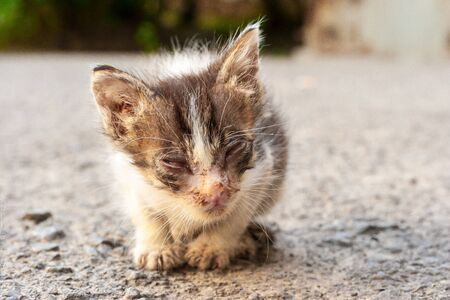 A small sick kitten sitting on the road. A little homeless kitten is starving and sick abandoned alone in the street. Reklamní fotografie