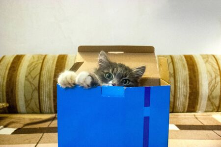 Home cat climbed into a cardboard box from under the purchases. Cat in a gift box. Reklamní fotografie