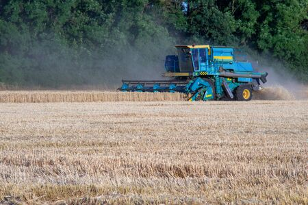 Combine machine is harvesting oats on working on a wheat cuts the field of mature ripe yellow wheat